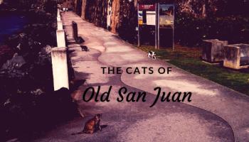 Cats of old san juan puerto rico