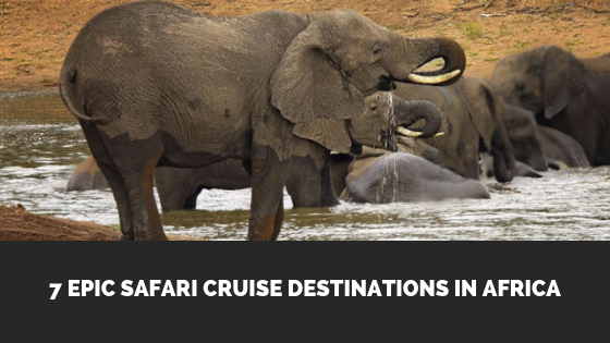 african safari cruise