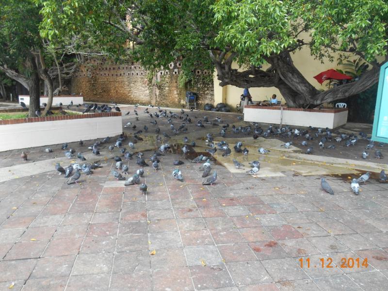 Old San Juan Pigeon Park